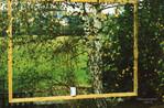 Tasse, Baum, Birken, Fotografie