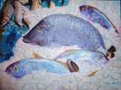 Acrylmalerei, Meer, Fische, Rot