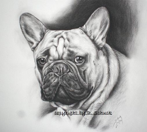 Französische Bulldogge Französische Bulldogge Bulldogge