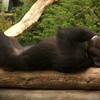 Langeweile, Tiere, Affe, Fotografie