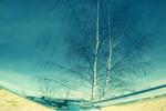 Baum, Licht, Blau, Birken