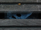 Spinnennetz, Holz, Fotografie, Augen