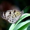 Weiß, Blüte, Tiere, Naturschutz