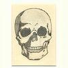 Zeichnung, Bleistiftzeichnung, Schädel, Tuschmalerei