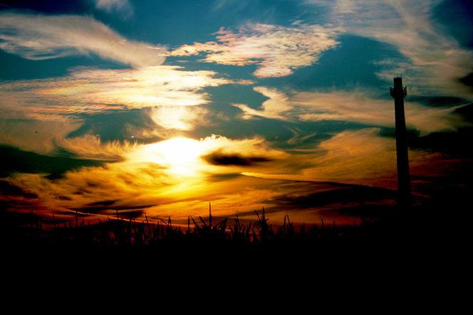 Sonne, Licht, Maisfeld, Pflanzen, Himmel, Luft
