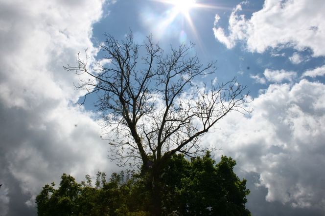Blätter, Wolken, Sonne, Wind, Baum, Licht