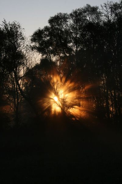Strahlen, Baum, Himmel, Sonne, Licht, Fotografie