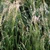 Herbst, Korn, Feld, Getreide