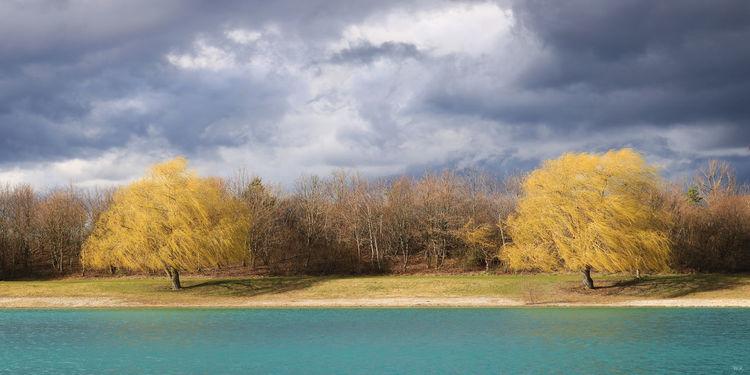 Zweig, Licht, Energie, Wasser, See, Stamm
