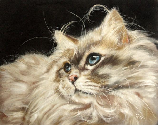 Realismus, Katze, Pastellmalerei, Tier malerei, Langhaar, Malerei