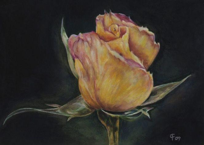 Blüte, Buntstiftzeichnung, Fotorealismus, Blumen, Zeichnung, Rose