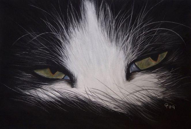 Schwarzweiß, Tiere, Pastellmalerei, Fotorealismus, Katze, Malerei