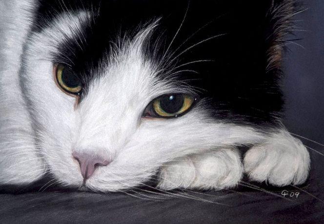 Pastellmalerei, Haustier, Malerei, Katze, Tiere, Siesta