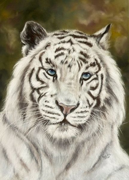 Tierwelt, Weiß, Katze, Malerei, Pastellmalerei, Fotorealismus