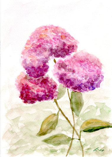 Hortensien, Blumen, Blüte, Dolden, Aquarell