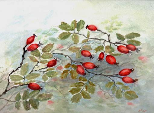 Rose, Hagebutte, Trocken, Herbst, Zweig, Rot