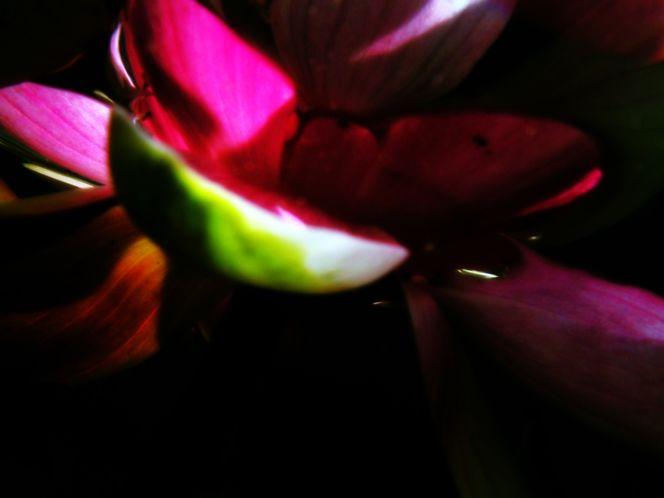 Wasser experiment, Fotografie, Konzept, Sonne