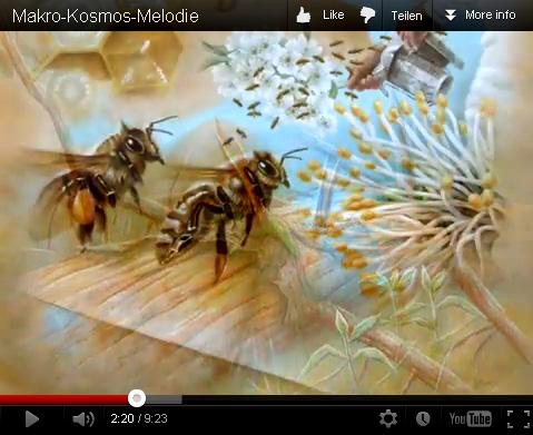 Makro, Menschen, Umwelt, Realismus, Universum, Pflanzen