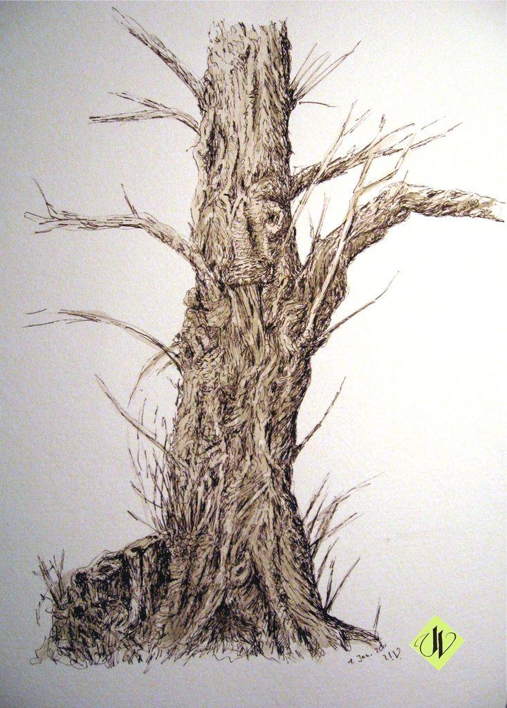 Rinde - 110 Bilder und Ideen auf KunstNet | Baum, Holz und Natur