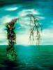 Malerei, Surreal, Evolution