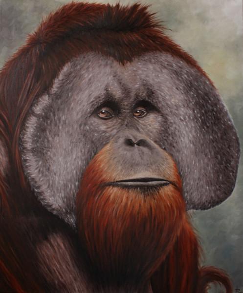 Tierportrait, Tiermalerei, Affe, Irina wall, Menschenaffen, Tiere