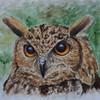Irina wall, Adlereule, Tiere, Tierportrait
