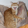 Katze, Tiere, Irina wall, Tierfotografie