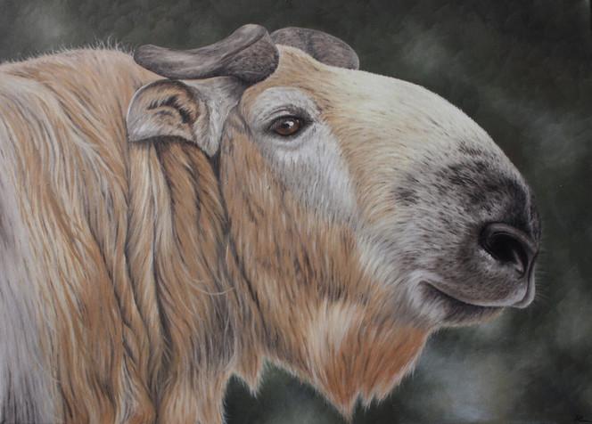 Takin, Tierportrait, Tiere, Tiermalerei, Irina wall, Malerei