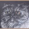 Pastellmalerei, Katze, Kreide, Perserkatze