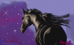 Schwarz, Traum, Araber, Pferde