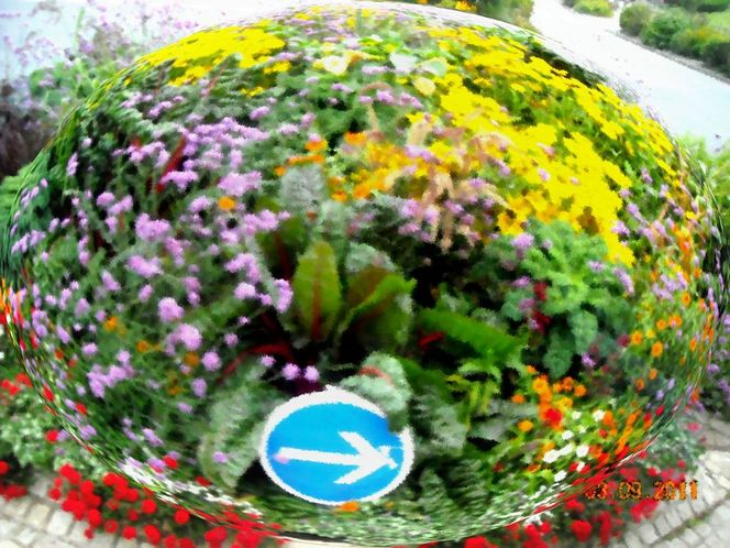 Kreisverkehr, Normandie, Kirche, Frankreich, Hortensien, Bretagne