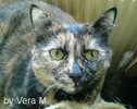 Flecky, Katze, Fotografie, Tiere