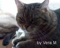 Mauzi, Portrait, Katze, Fotografie