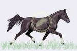 Pony, Howrse, Pferde, Digitale kunst