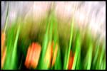 Ruhe, Gras, Unscharf, Digitale kunst