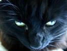 Hypnotsch, Katze, Makro, Fotografie