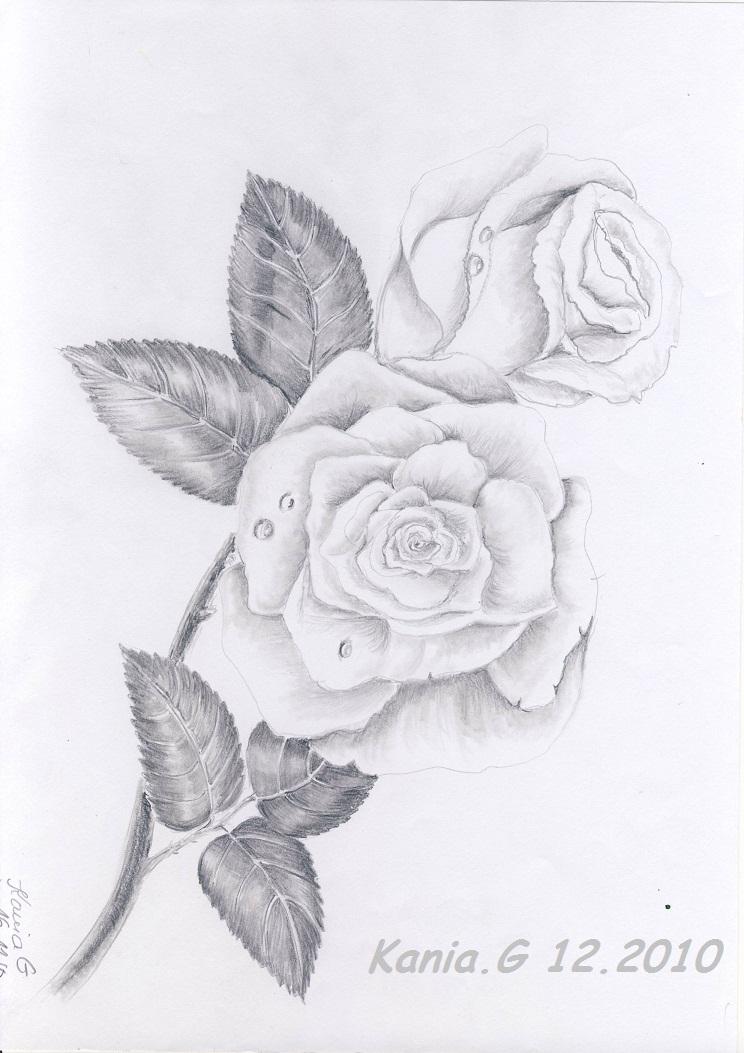 Rose Mit Bleistift Einfach Zeichnen Squarezom Club