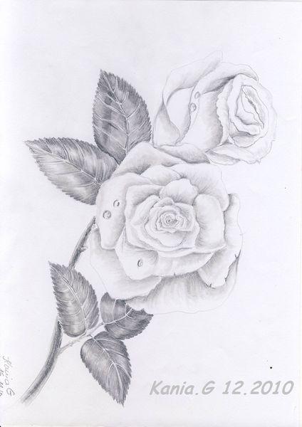 Kunstnet werke zeichnungen pflanzen rosen