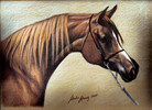 Tiermalerei, Malerei, Araber, Tierportrait