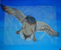 Fliegen, Ente, Blau, Malerei