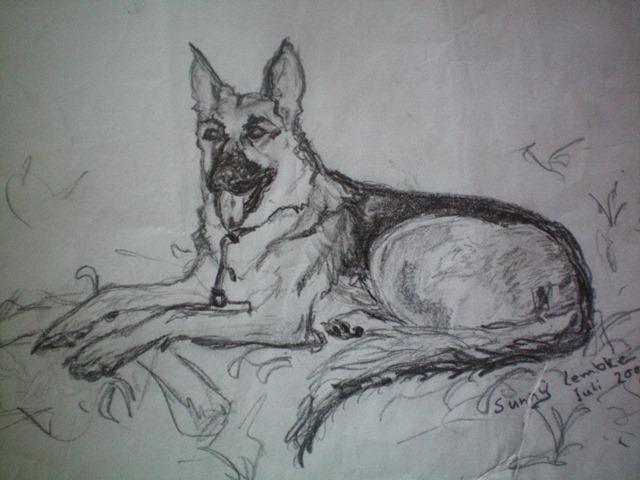 Zeichnungen, Hund