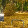 Digital, Fotografie, Herbst