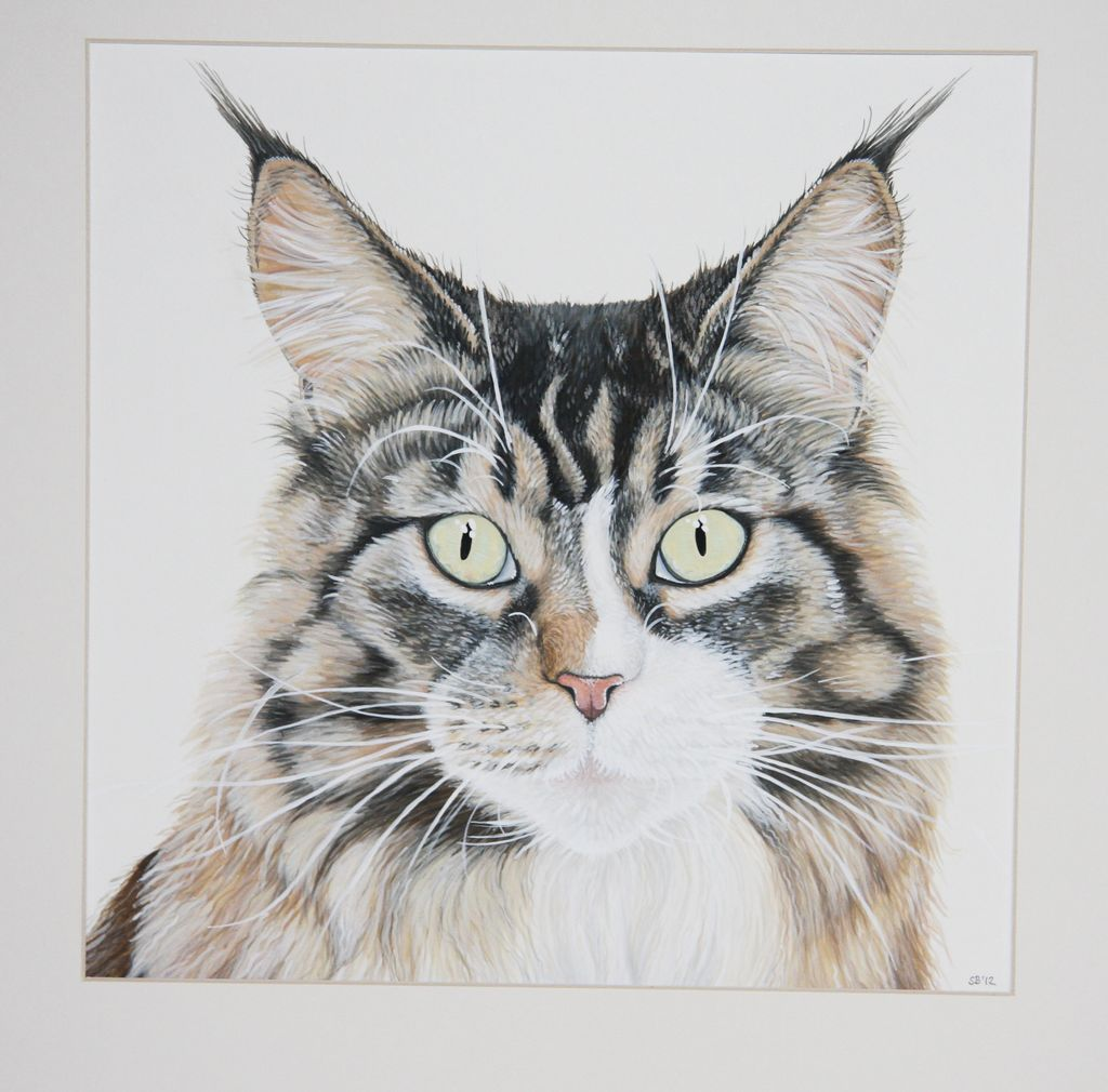 bild katze main coon tierportrait aquarellmalerei von. Black Bedroom Furniture Sets. Home Design Ideas
