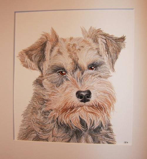 Tierportrait, Aquarellmalerei, Hund, Aquarell, Tiere
