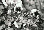 Grabmal, Analog, Zerfall, Blumen