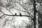 Natur, Vogel, Wald, Analog