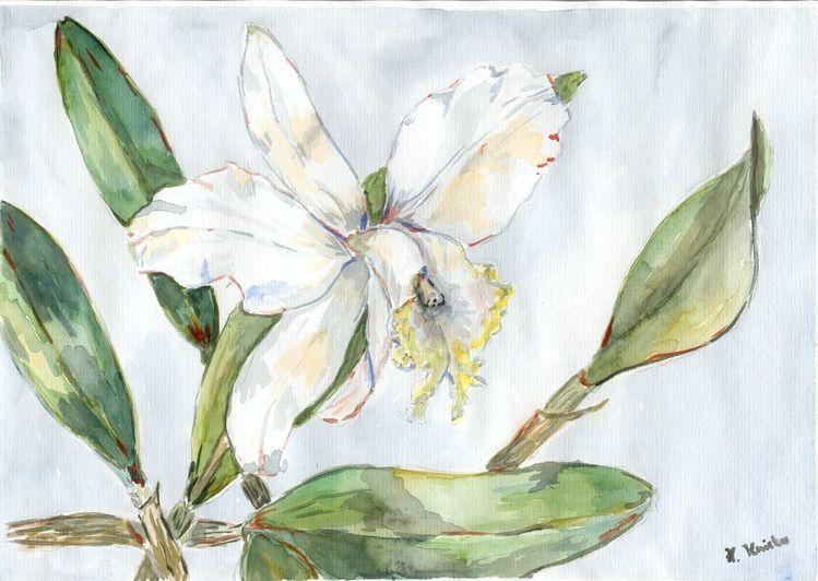 Catlaya, Orchidee, Aquarellmalerei, Aquarell