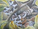 Natur, Schlange, Malerei, Tiere