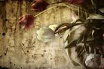 Tulpen, Frühling, Wärme, Sonne