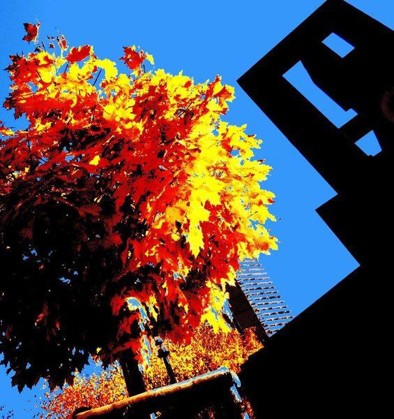 Herbst, Baum, Uni, Köln, Fotografie, Pflanzen
